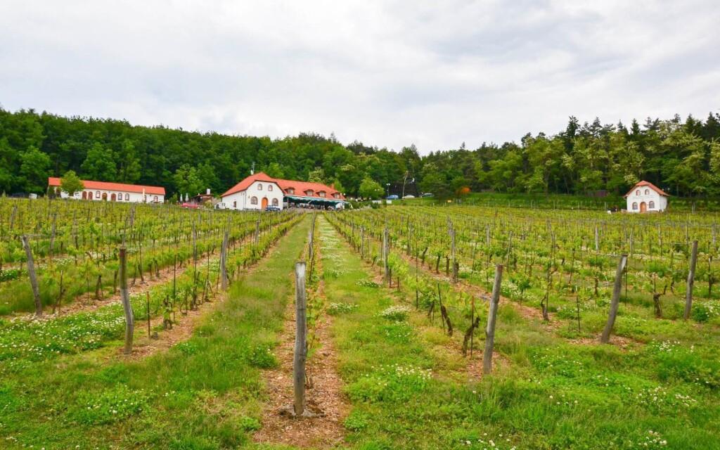 Vinařský pobyt ve Vinařství a Hotelu Sádek na Vysočině