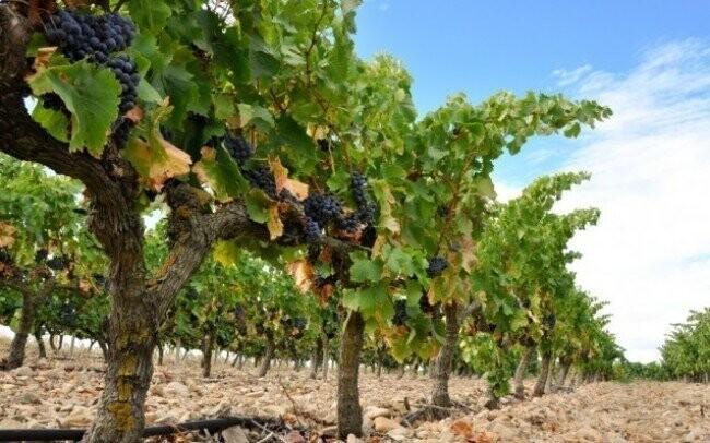 Užijte si pobyt na jižní Moravě s vínem