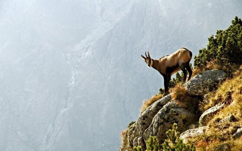 Nízké Tatry jsou útočištěm spousty divokých zvířat