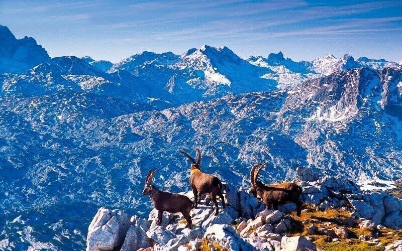 Nationalpark Berchtesgaden1 Slevoking