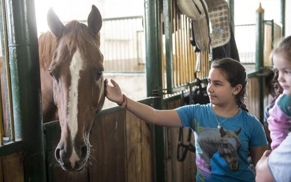 Koně v místních stájích vás okouzlí