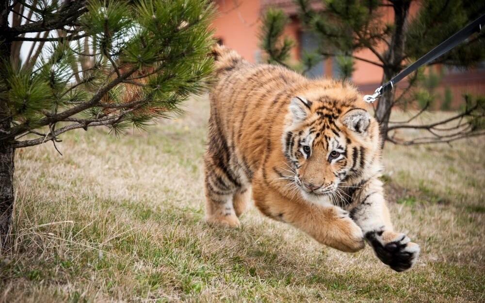 Ve Wild Parku se dostanete do kontaktu s divočinou