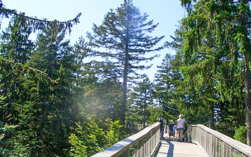 Šumava přeje a pěší turistice