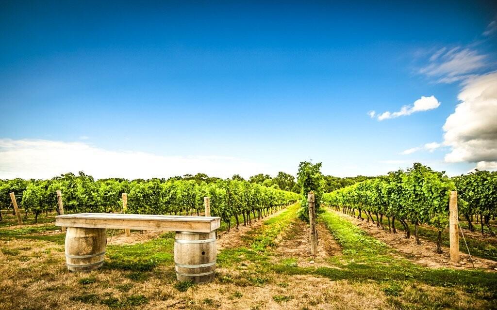 Projděte si vinařskou stezku a ochutnejte to nejlepší víno