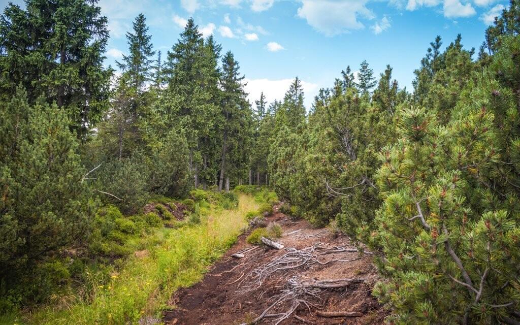 Božídarské rašelinisko, Krušné hory, turistika