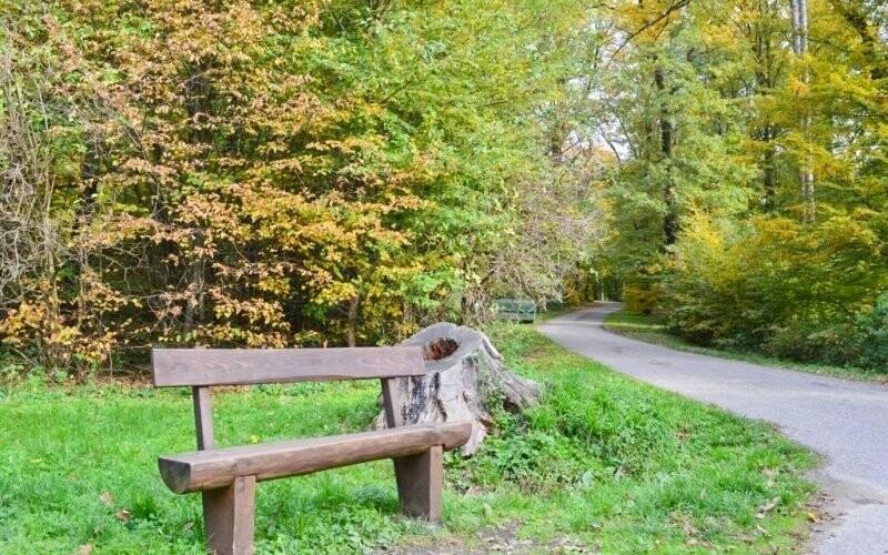 Vydejte se také na exkurzi k rozhledně v lesích