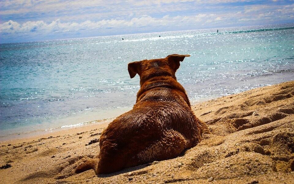 V Bašce Vodě je i psí pláž