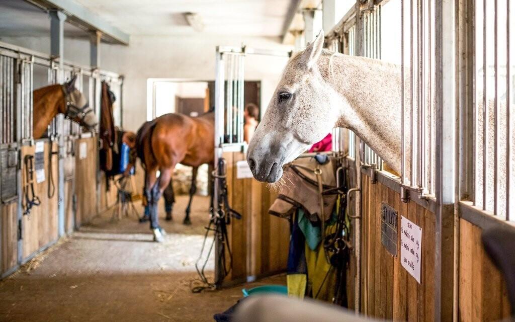 Přímo u hotelu jsou koňské stáje