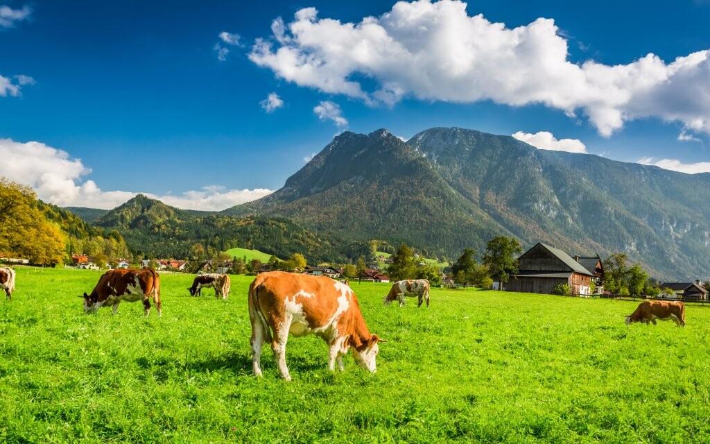 Pastviny v rakouských Alpách, Hochkar, Rakousko