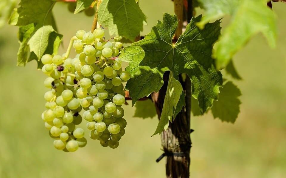 Okolí penzionu je plné vinohradů a sklípků