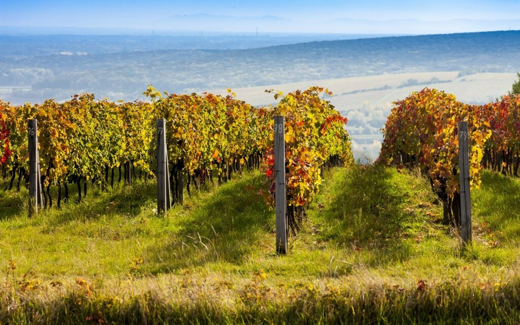 Za vínom jedine na južnú Moravu