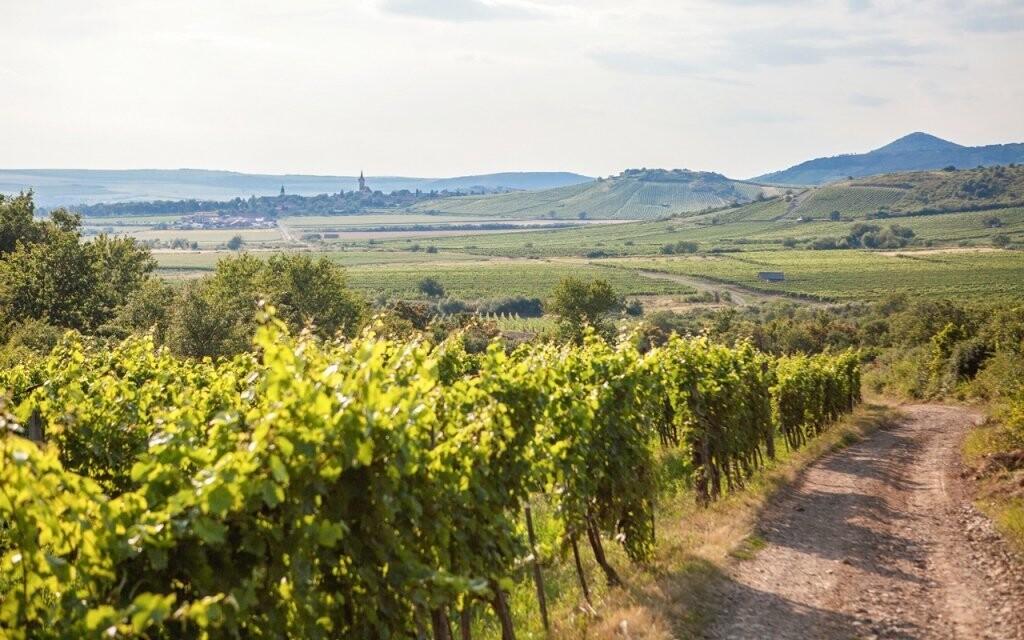 Vychutnejte si pobyt v kraji tokajského vína