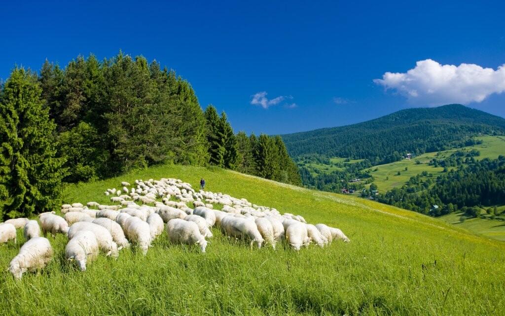 Stádo ovcí, salaš, Malá Fatra, Slovensko