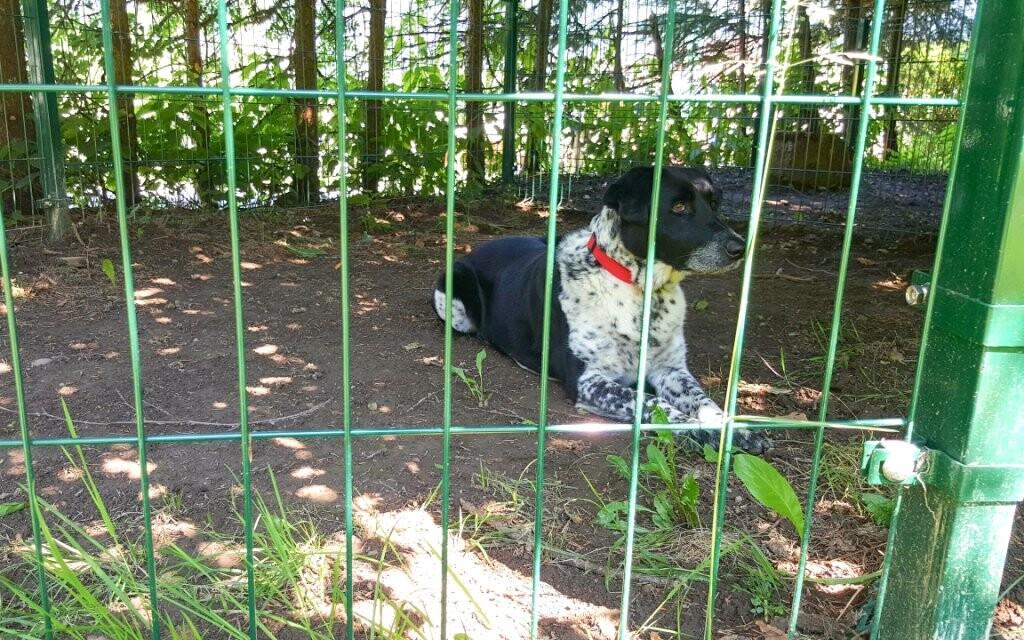 Vezmite na dovolenku aj psíka, Haus Lavendel, Ossiach
