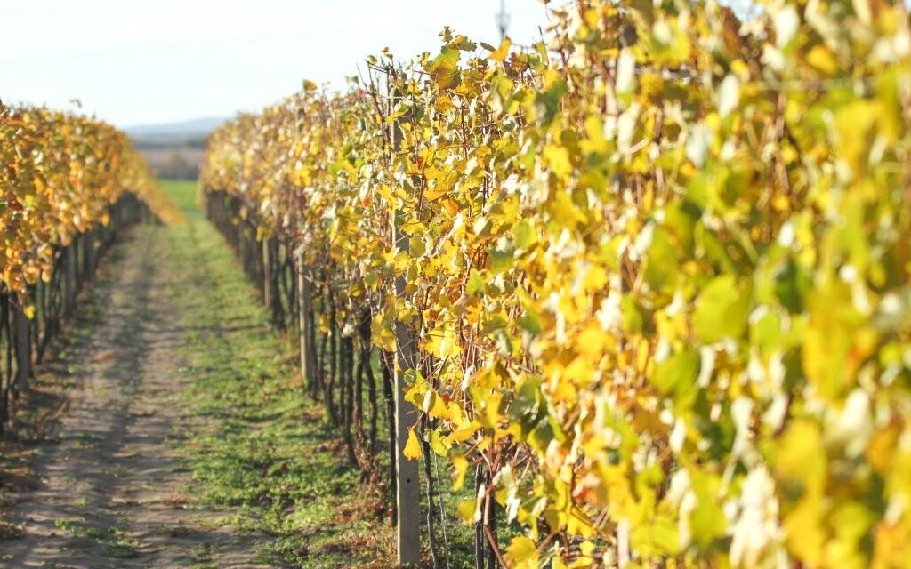 Vinice, Podluží, vinársky pobyt na južnej Morave