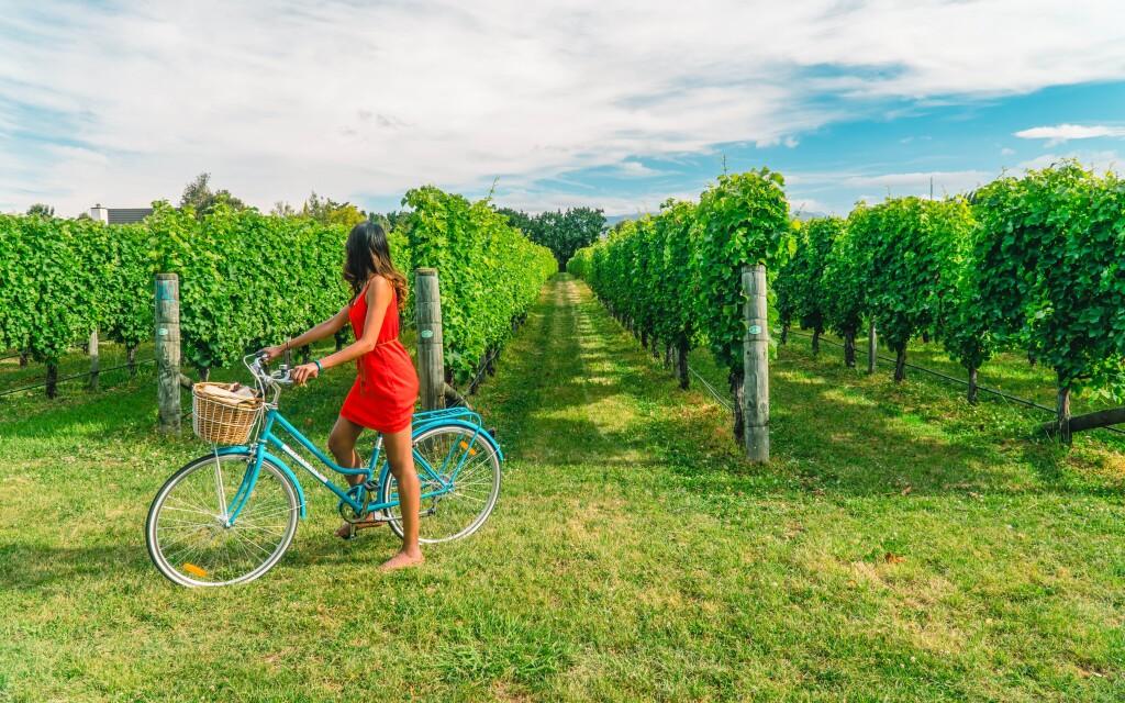 Víno, vinice, Pension Mlýn, Velké Bílovice, jižní Morava