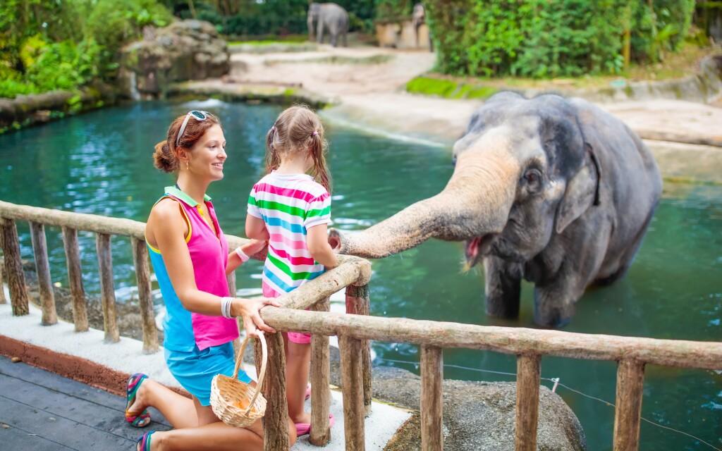 Blízko penzionu najdete Zoo Dvůr Králové