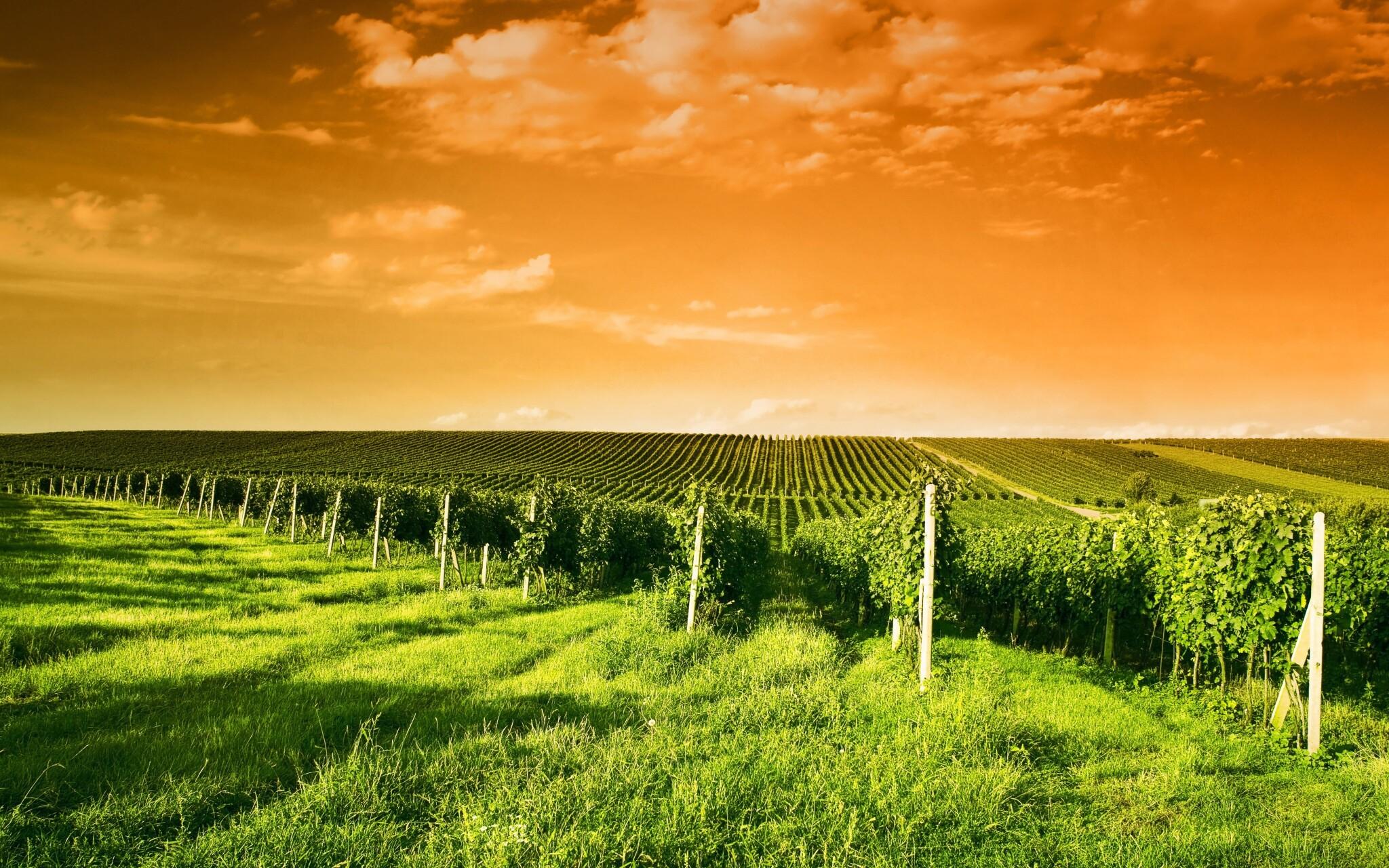 Vydejte se na procházku po okolí plném vinic