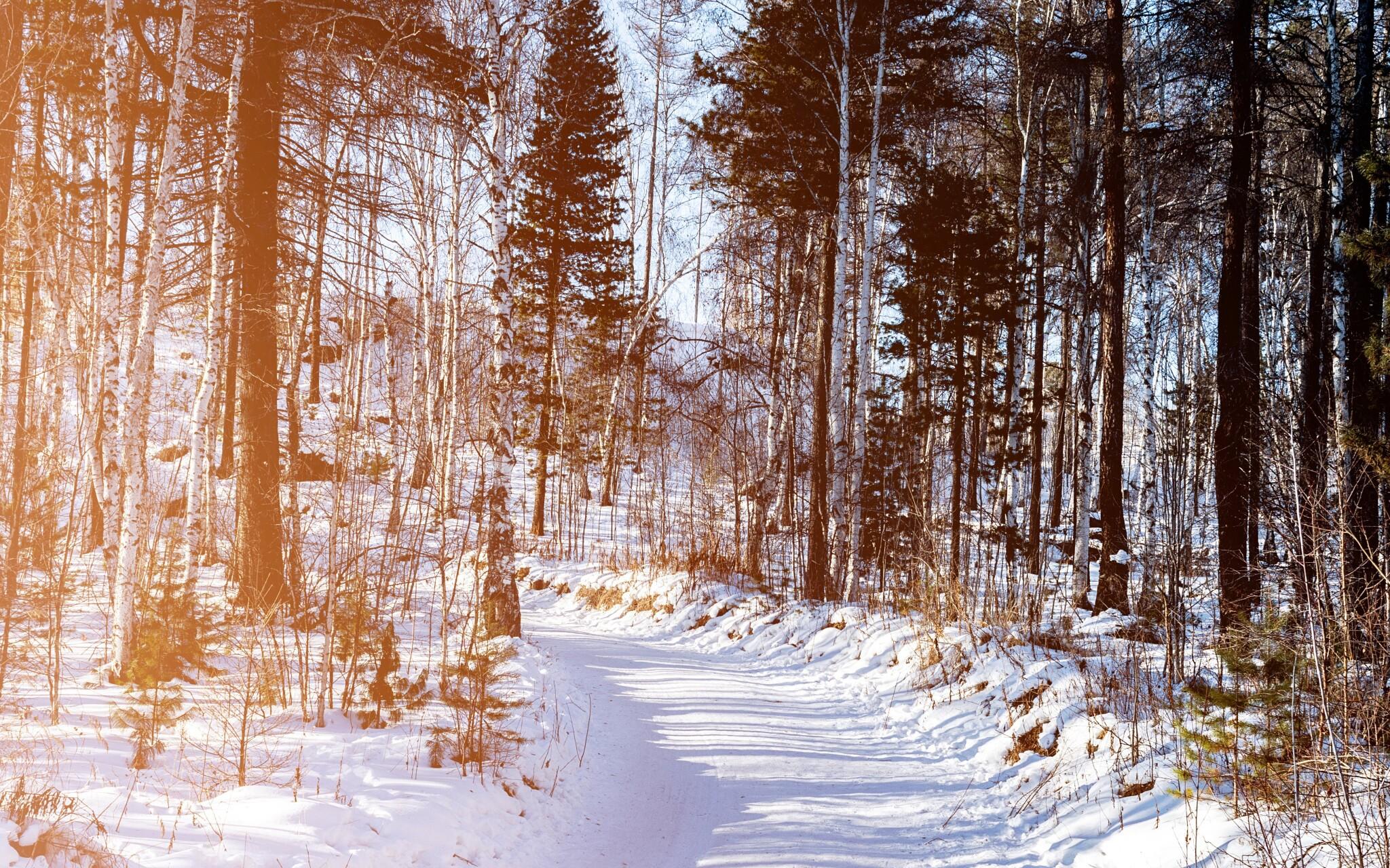 Národný park Šumava a CHKO Český les, turistika