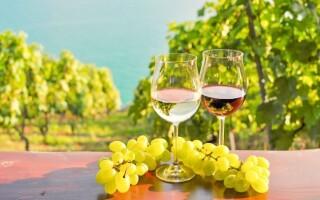 Víno, vinice, jižní Morava, Penzion Šatovské Lípy, Šatov