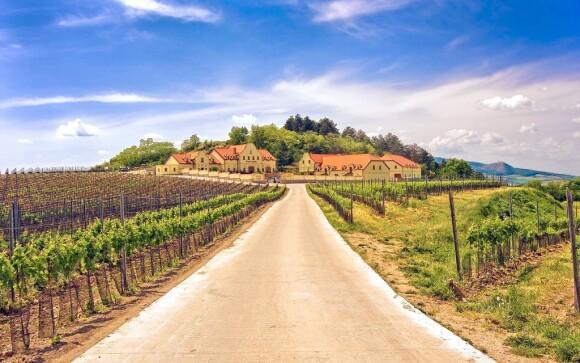 Vinice obklopují Vinařství U Kapličky v Zaječí