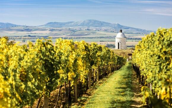 Za vínem nejlépe na jižní Moravu