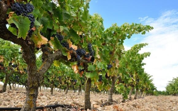 Užijte si pobyt na Jižní Moravě se vším všudy, tedy i se skvělým vínem