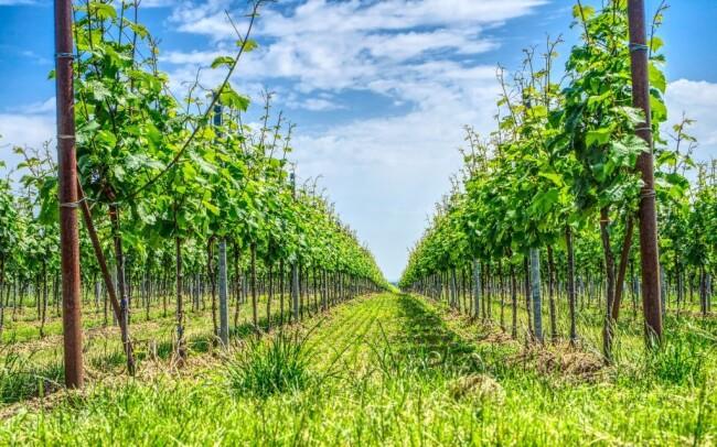 50% Jižní Morava: 3 denní vinařský pobyt pro DVA s…