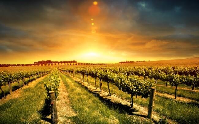 46% Jižní Morava: 3-4 denní vinařský pobyt pro DVA ve…