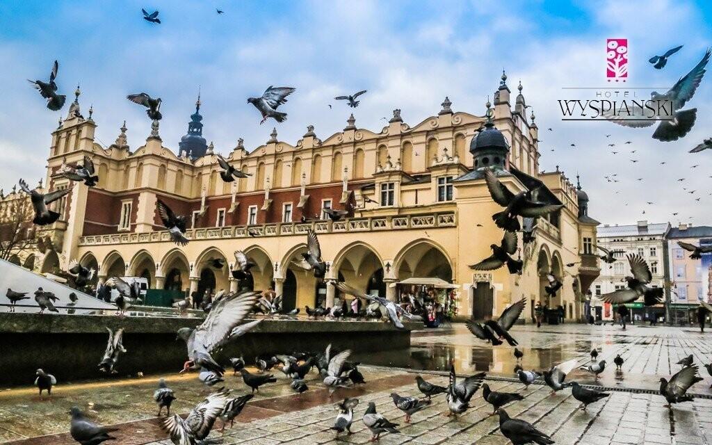 Krakovští holubi jsou jedním ze symbolů tohoto města