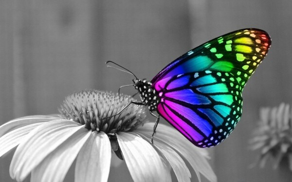 Motýlí dům Žírovnice
