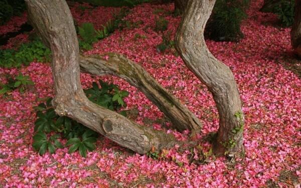 Kámoni Arboretum