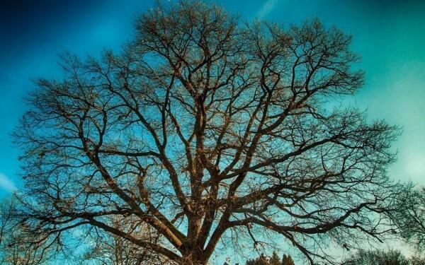 Arboretum Sárvár