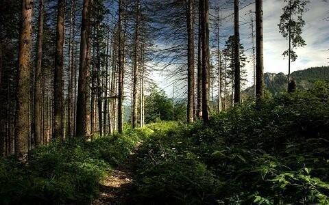 Krajinný park Przemkow