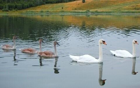 Jezero Großer Scheibelsee