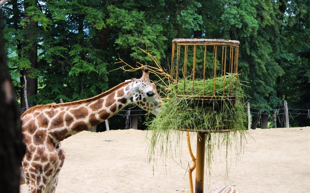 Zoo Zlín- Ĺešná