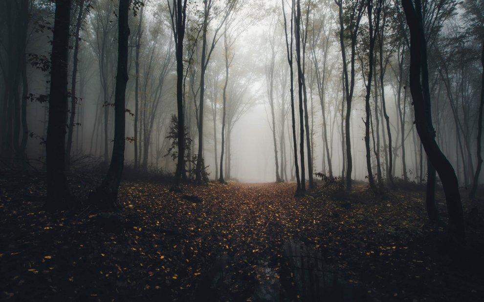 Les Pánova březina