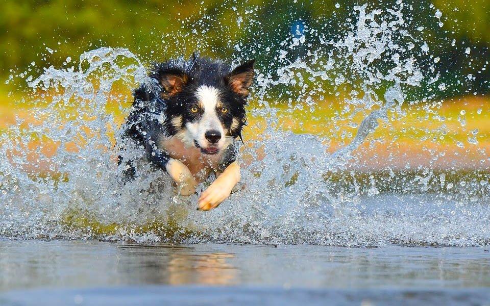 Pobyt pri vode s množstvom plávanie na psie spôsob