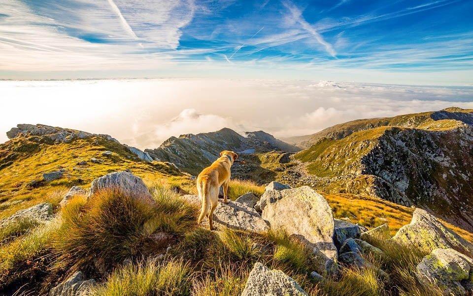 Dovolenka na horách aj s vaším psom