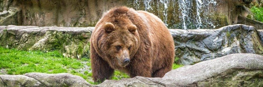 Objevte to NEJ ze Slovenska: 9 nejkrásnějších zoologických a botanických zahrad