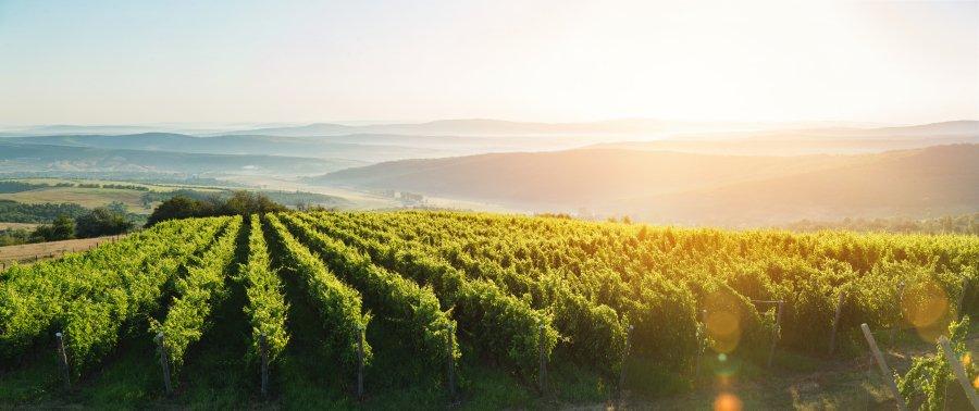 Magyarország legjobbjai: Hazánk 6 csodás borrégiója, amiket minden borrajongónak kötelező felfedeznie