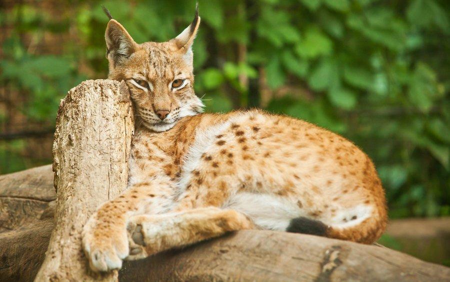 Objavte to NAJ z Česka: 10 NAJkrajších zoologických záhrad + 4 tajné tipy
